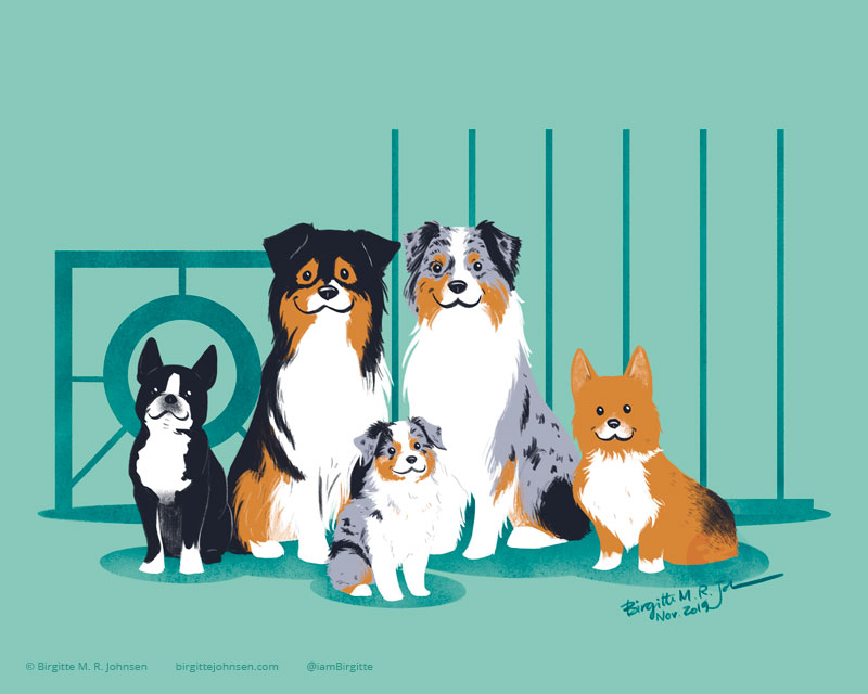 Painting of five dogs (three Australian shepherds, one Boston terrier, and one Pembroke Welsh corgi), in front of agility gear.