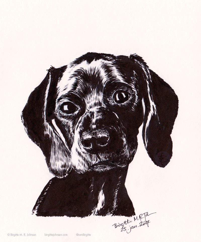 Portrait of Boo the black and white pointer drawn in ink. Boo is facing the viewer, with her head slightly tilted.