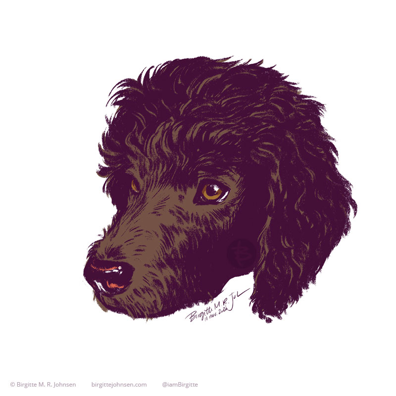 A digital portrait of Cadbry the chocolate coloured standard poodle, painted in a limited colour palette of dark purple, dark and light brown, and red on a white background.