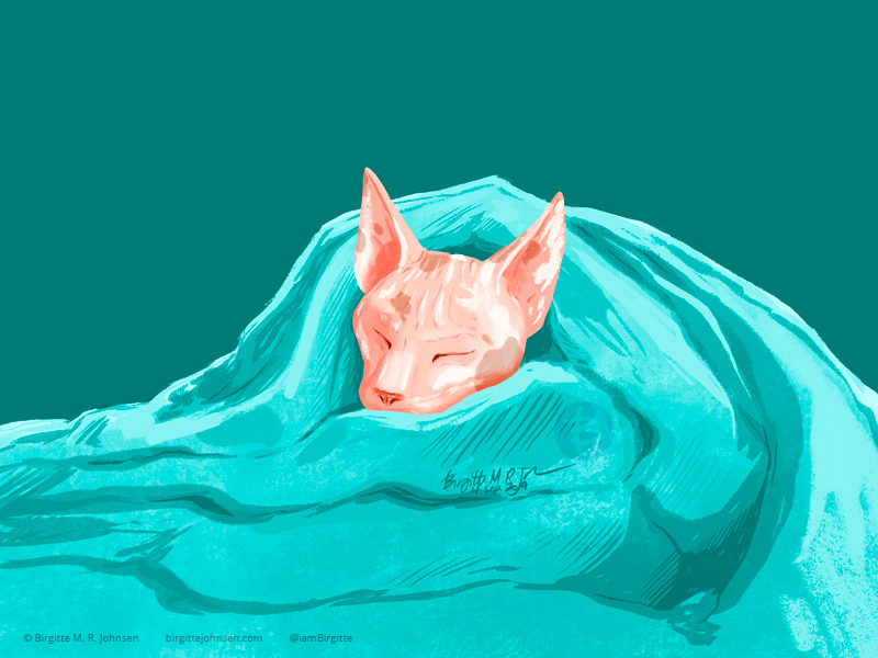 A sphynx cat all wrapped up in a blanket, sleeping very cosily.