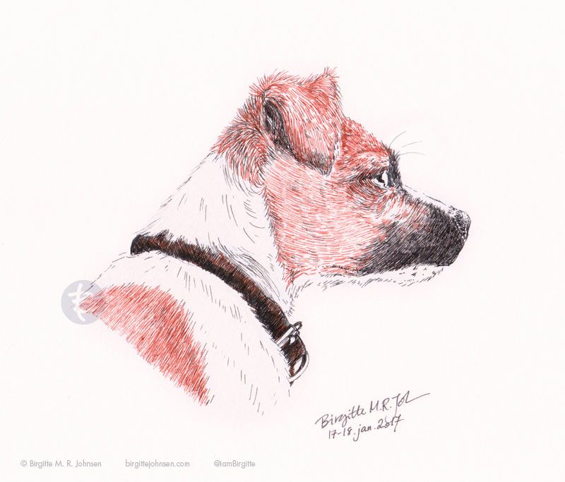 Daisy, the jack russell terrier.