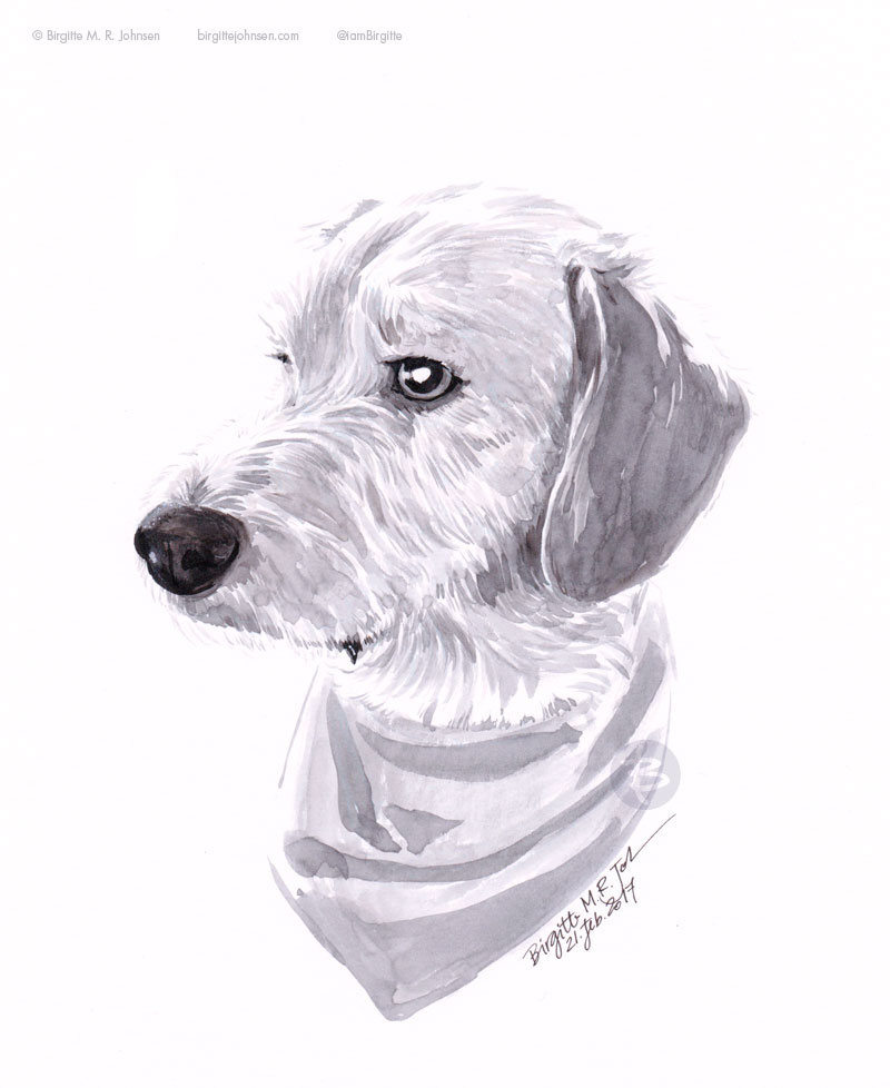 Dexter the labradoodle drawn in ink.