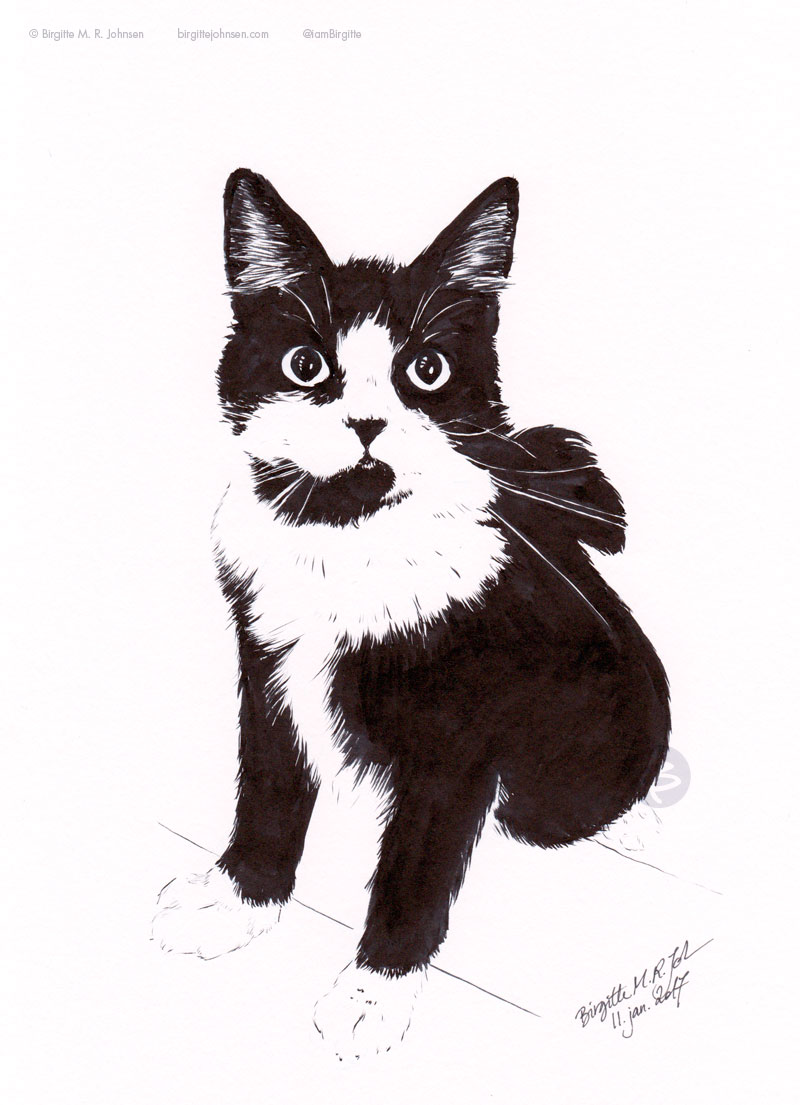 Dingus the black and white cat.