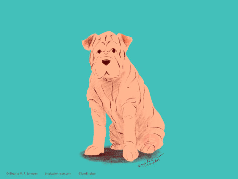 A Shar-pei on a teal background.