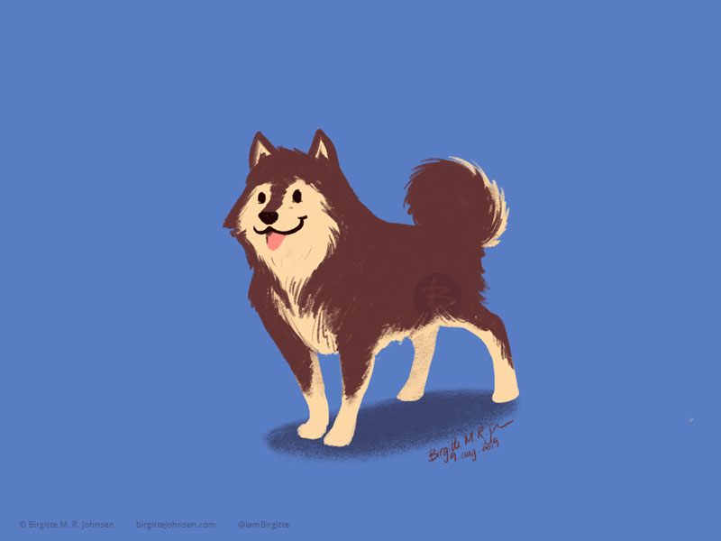 A cream and brown Finnish Lapphund painted on a dusky blue background.