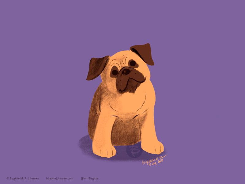A tan pug on a purple background.