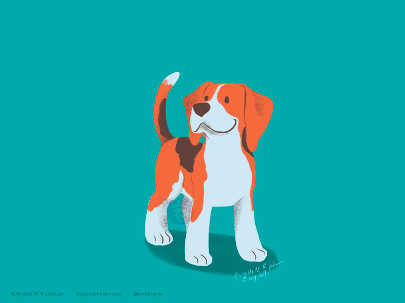 A happy little tricoloured beagle on a bright teal background.