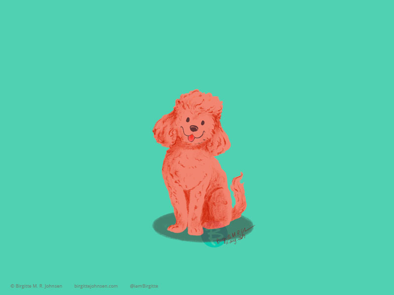 A proud red Toy Poodle on a light turquoise background.