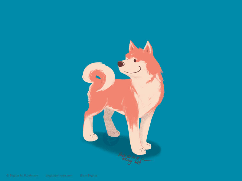 A red and cream Akita looking very happy on its teal background.