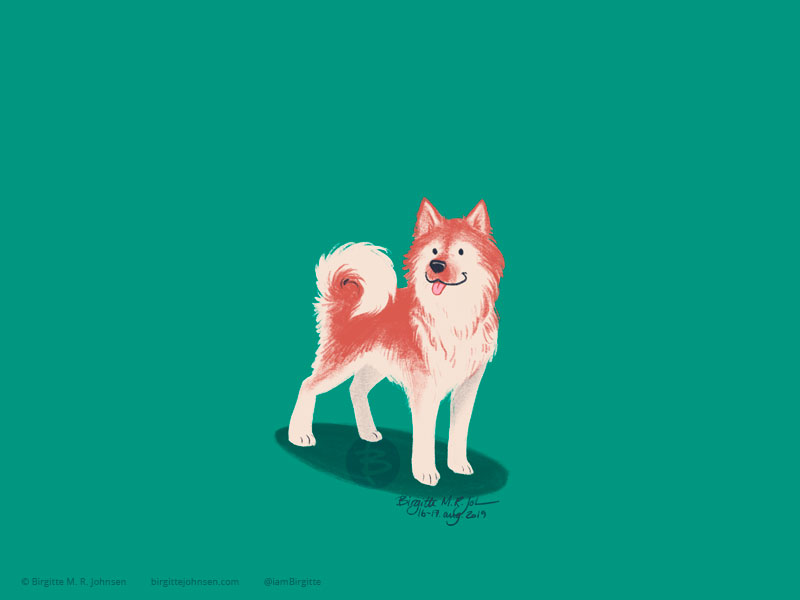 A happy little red and cream Icelandic Sheepdog painted on a green background.