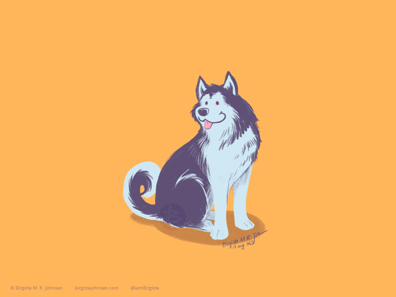 A very happy and fluffy grey and white Alaskan Malamute painted on a warm yellow background.