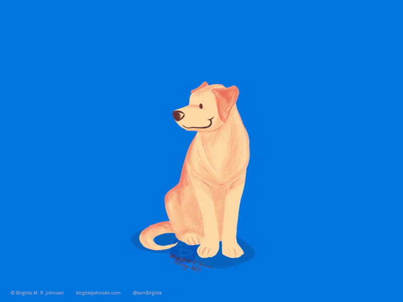 A smiling golden labrador retriever on painted on a royal blue background.