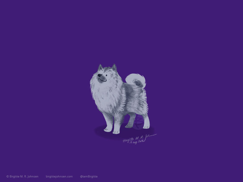 A grey little fluffy Keeshond painted on a dark purple background.