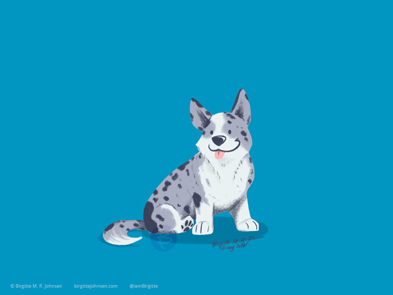 A white and grey spotted Cardigan Welsh Corgi sitting happily on a bright greenish-blue background.
