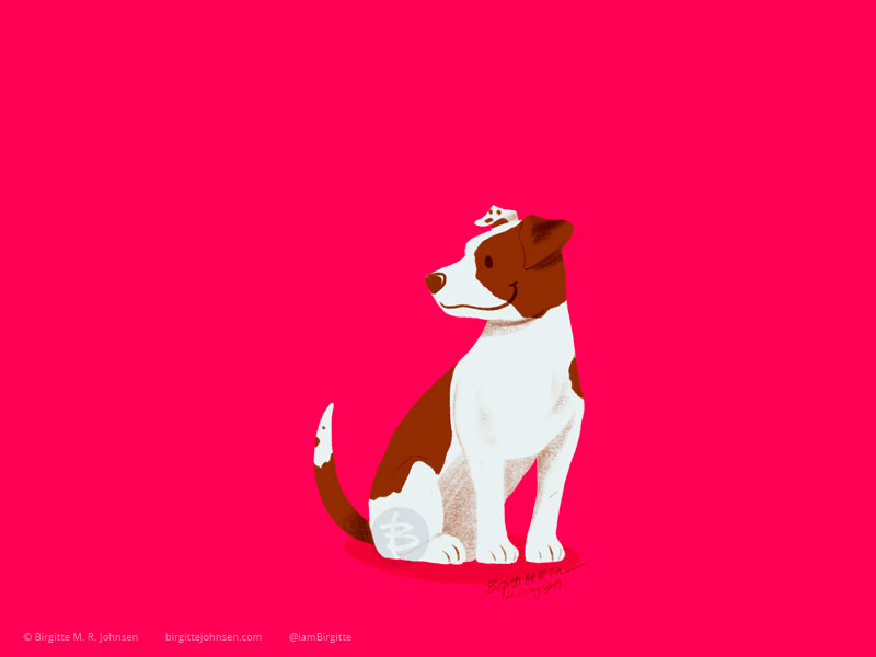 A small and energic Jack Russell Terrier sitting on a bright pink background.