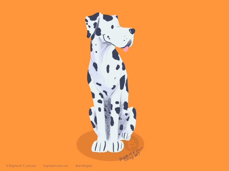 A white and black Great Dane on an orange background.