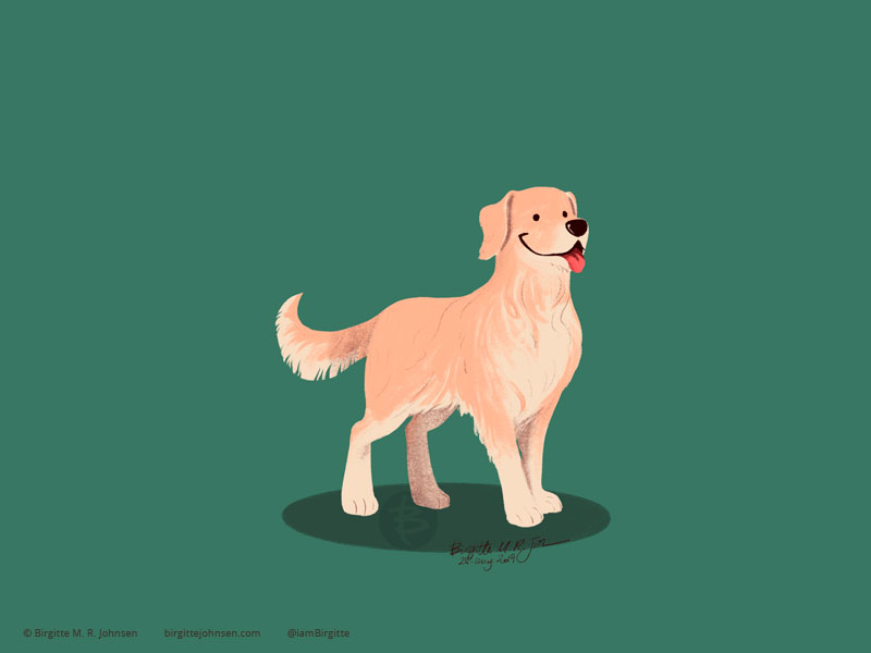 A happy Golden Retriever on a green background.