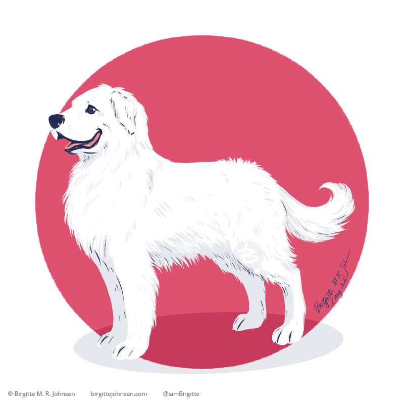 A digital painting of a Pyrenean mountain dog on a pink circular background.