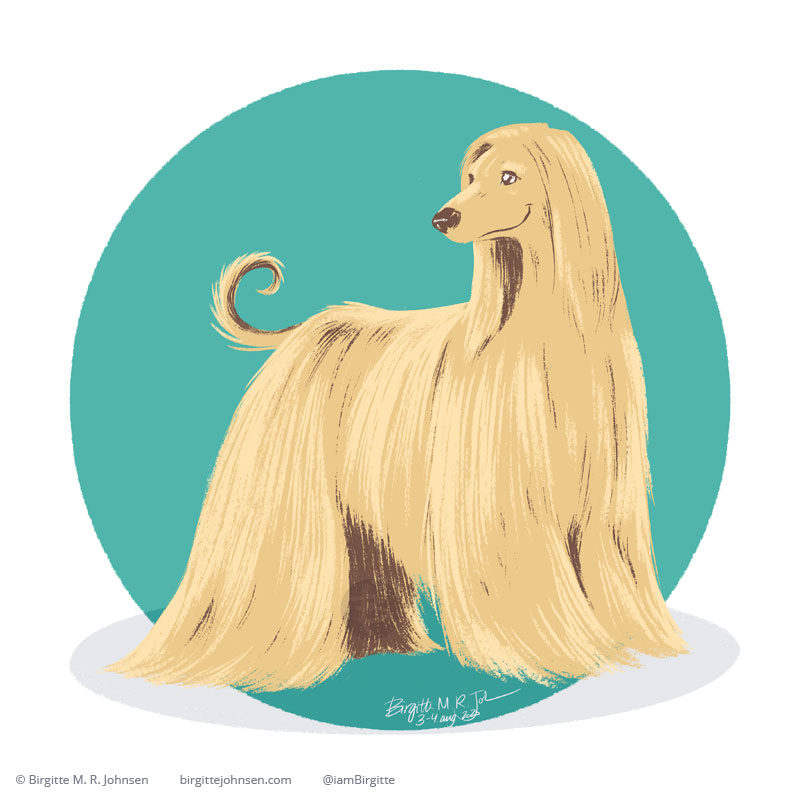 A digital painting of happy blond very well groomed Afghan hound on a teal background.