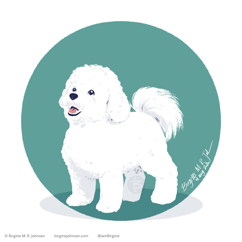 A very cute and obedient Bichon frisé on a circular teal background. The dog appears looking up at its owner, who may or may not be holding a treat, but as the owner isn't in the image there is no way of knowing.