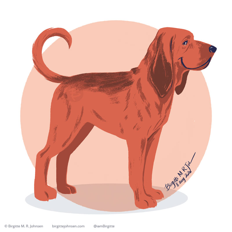 A bloodhound standing happily in front of a light peach circular background, painted digitally in Procreate.