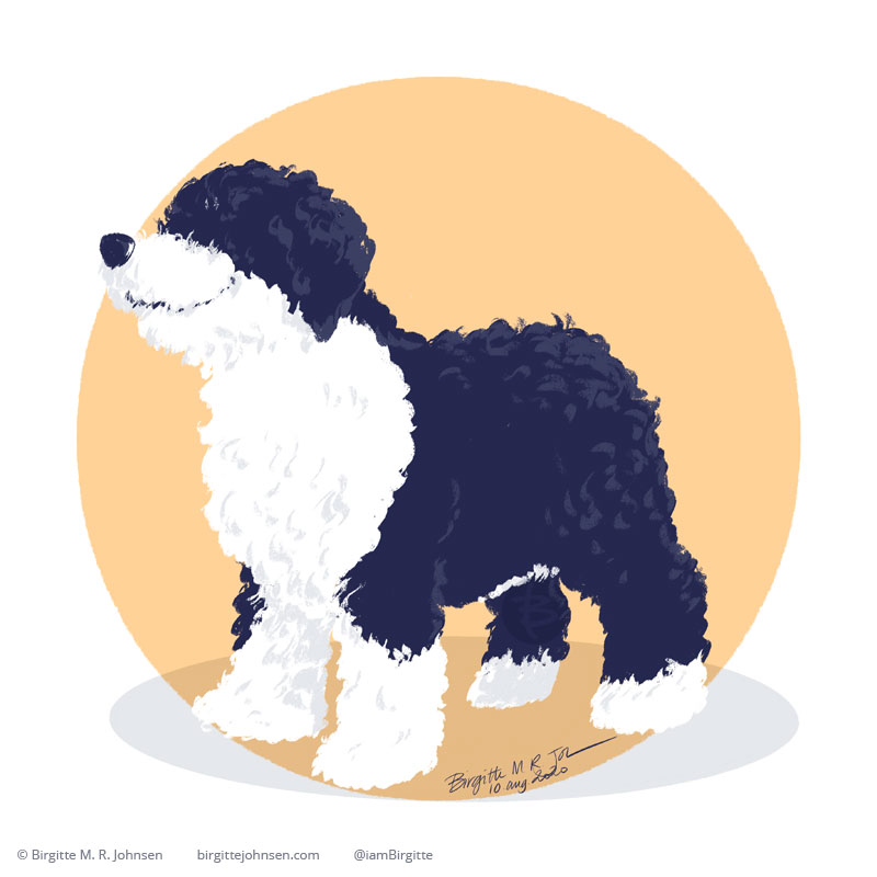 A happy black and white Spanish Water Dog, which has curly hair like a poodle, standing in front of a light warm yellow circular background. Painted digitally in Procreate.