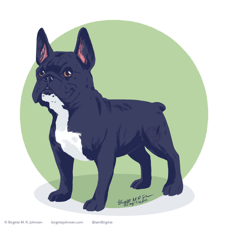A happy black and white French Bulldog standing in front of a light green background. Painted digitally in Procreate.