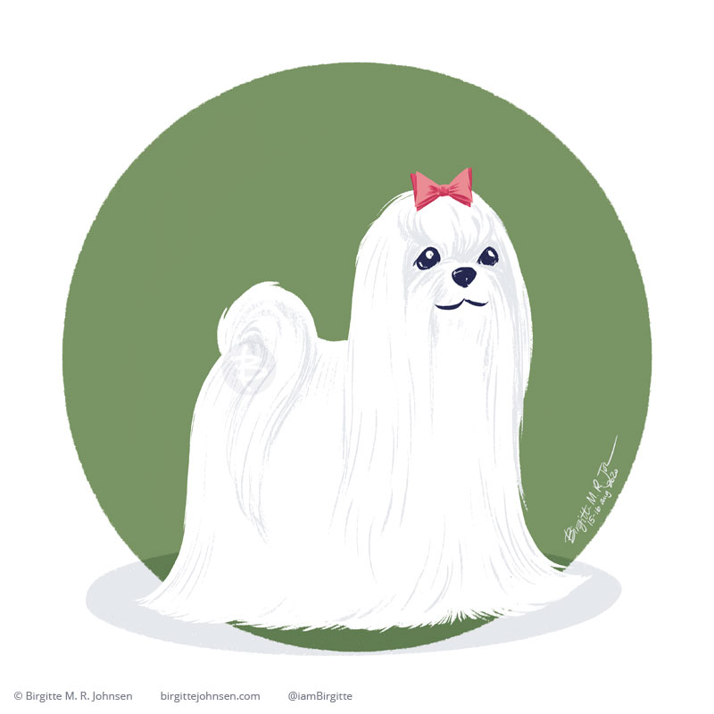 A happy Maltese with its long white fur which reaches all the day down to the floor. The dog is painted digitally in Procreate, and is portrayed in front of a green background.