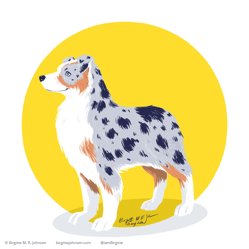 A digital painting of an Australian Shepherd, in blue merle colour, which is a mottled patchwork of gray and black, but with the addition of copper points or white markings. The dog is painted in front of a circular yellow background.
