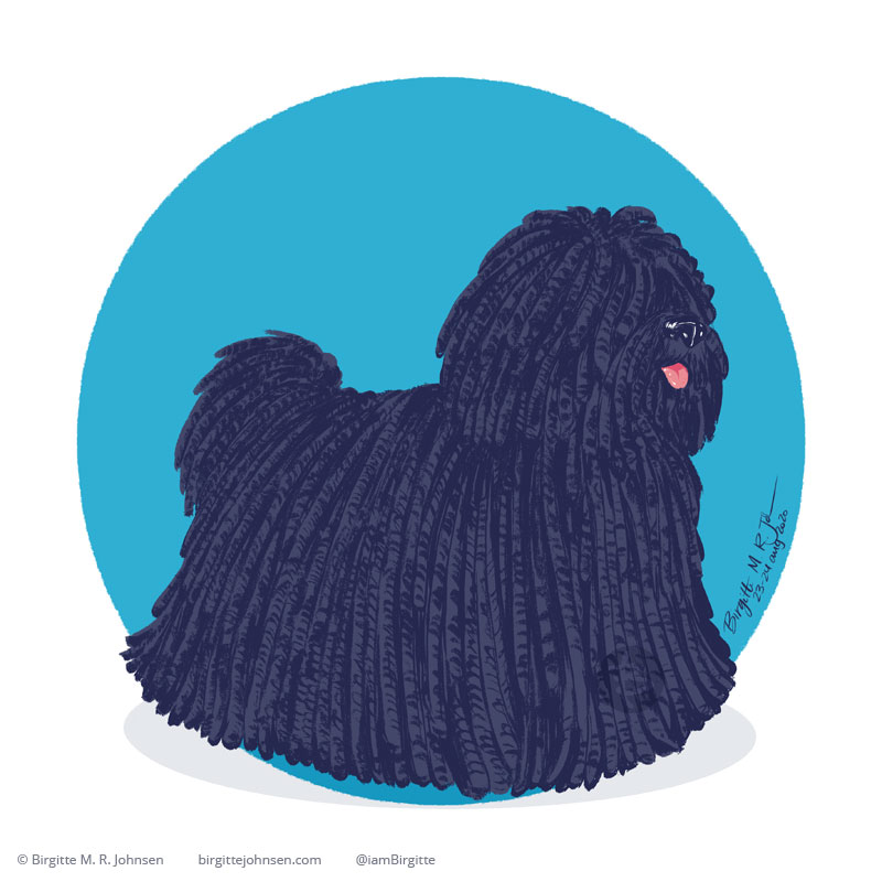 A puli dog, with its iconic long curly, almost dread like fur, painted digitally in front of a blue circular background.