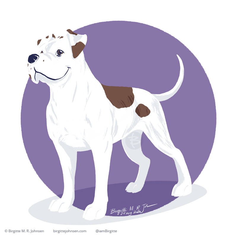 A happy white and brown spotted American Bulldog stands in front of a purple circular background.