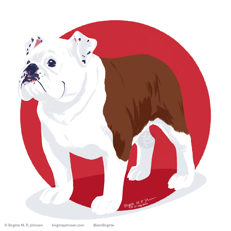 A happy English Bulldog painted digitally in front of a bright red circular background.