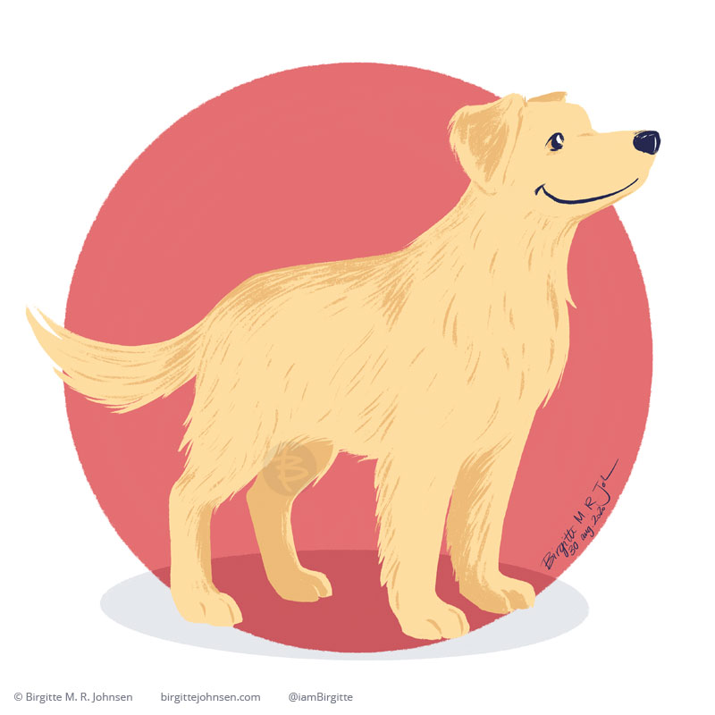 A Golden Retriever looking quite thoughtful, painted on a warm pink circular background.
