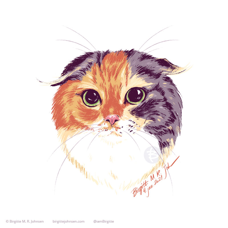 A pet portrait of Purin, the scottish fold. She is looking at the viewer with big dilated eyes, and her ears are folded slightly. Her face is multi coloured with areas of light grey and orange, both with tabby markings, and a white neck/chest. The image was painted digitally using only eight colours, including white.