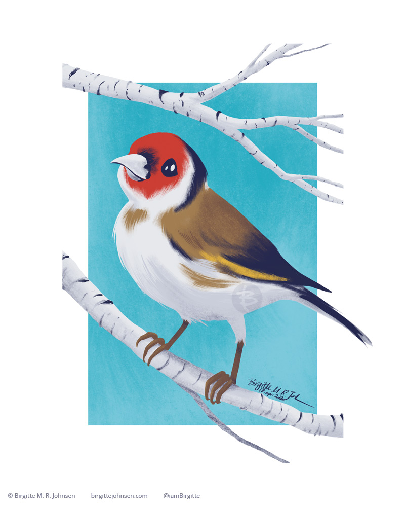 A happy European Goldfinch sitting on a birch branch.
