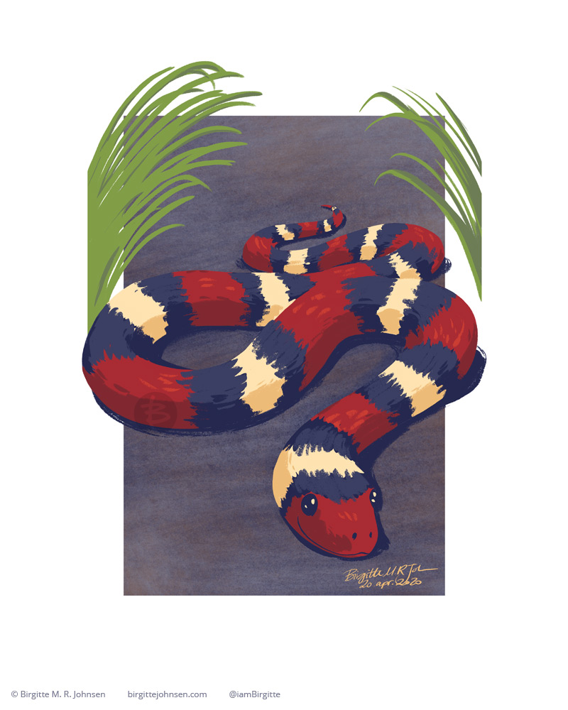 A colourful snake in the form of a scarlet kingsnake, which has ribbons of black, red and cream.