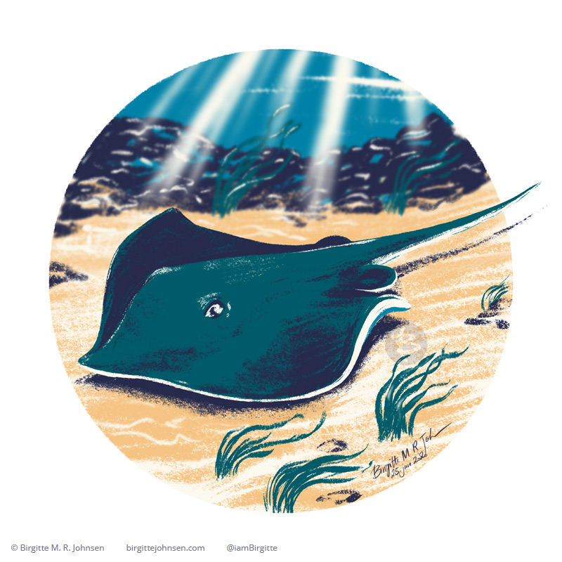 A stingray swimming close to the sea floor, painted digitally with a limited colour palette of cream, green, dark blue, blue and yellow.