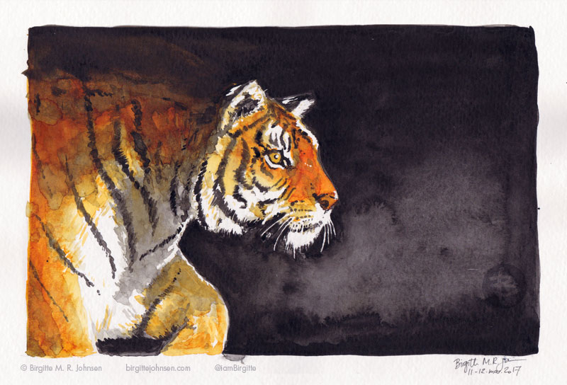 A tiger stepping out of the darkness, ready to pounce on its pray.