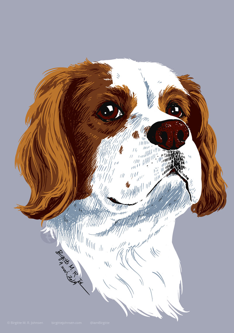 Portrait of Watson, the Cavalier King Charles spaniel.