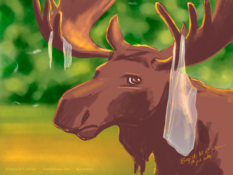 A moose very unamused with the plastic stuck in its antlers.